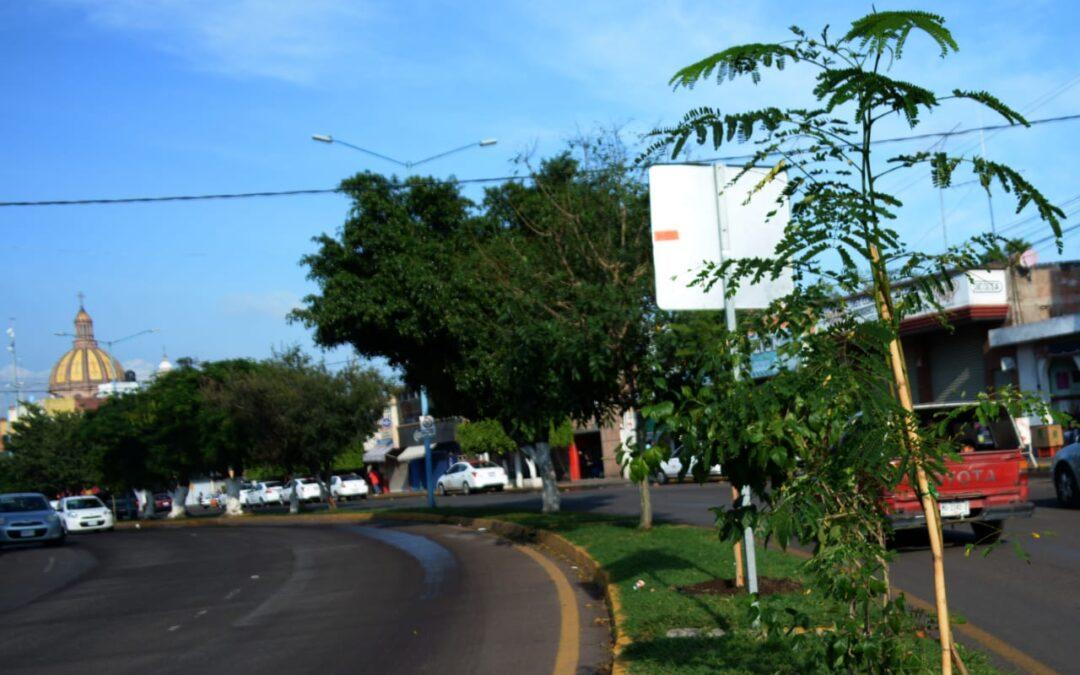 REHABILITARÁN CAMELLONES EN BULEVARES